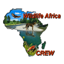 https://www.urecycleinitiative.org/wp-content/uploads/2020/04/wildlife-africa-1.png